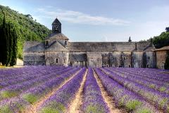 Senanque abbey with lavander fields