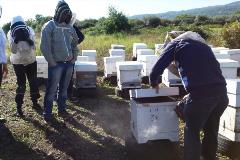 Exploring the best beekeeping practices in Sicily