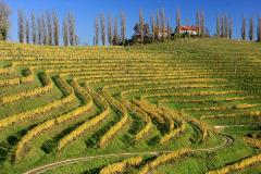 Vineyards of Jeruzalem, Slovenia