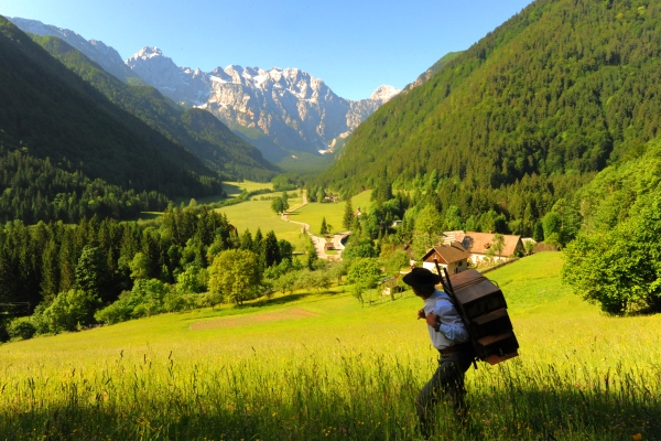 Beekeeper in Logarska valley_resized